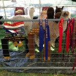 Clare Show 2013 ribbons